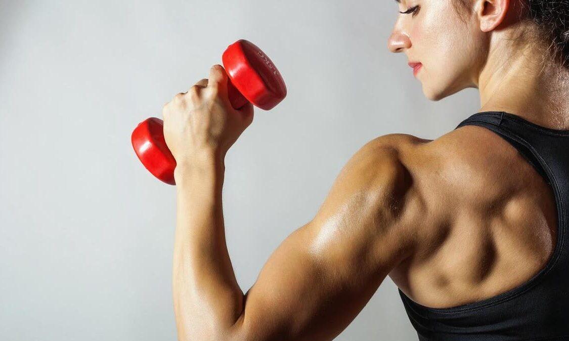 Definição de músculos